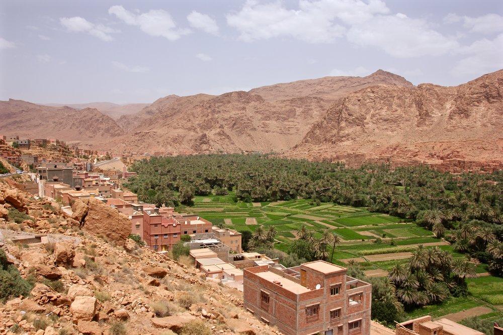 Desert Plantation