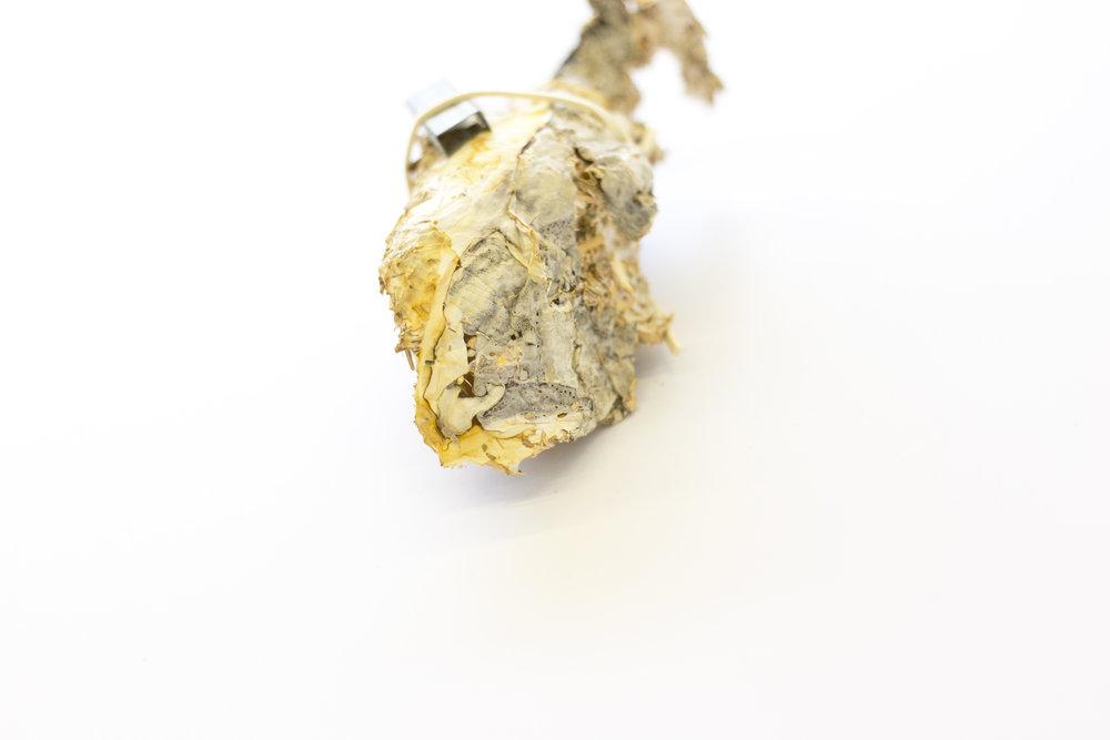 Mycelium, Staples