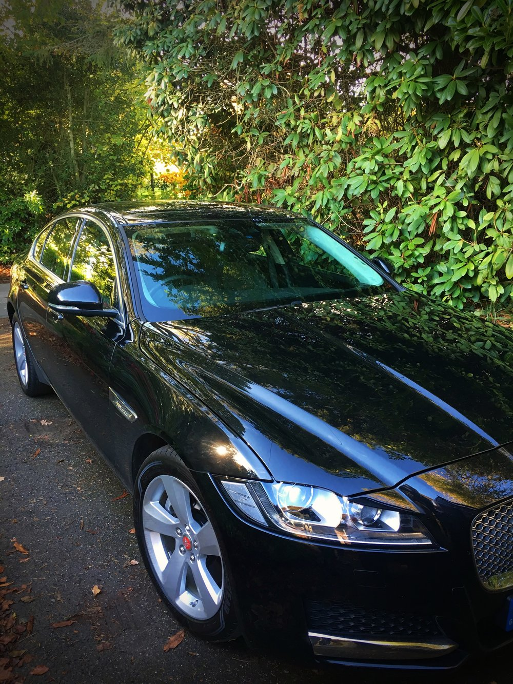 Jag XF front q