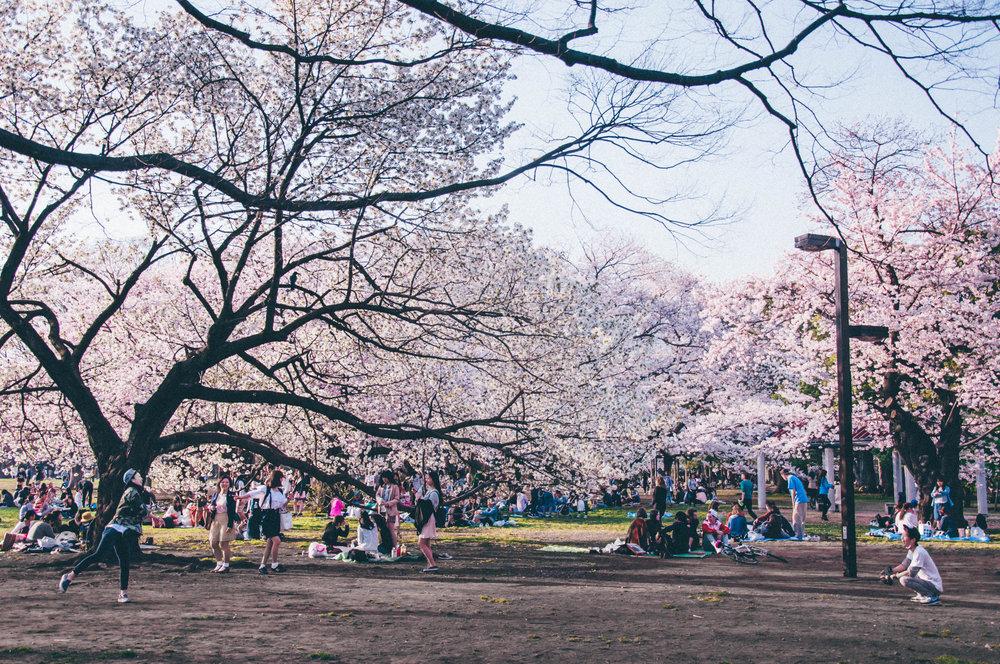 Tokyo.15-28.jpg