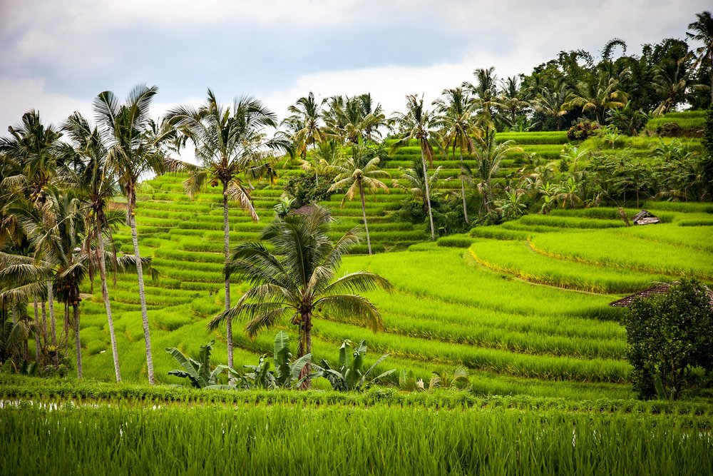Become cultured - Be consumed by the food culture in Bali as we take you on a luxury food safari in beautiful Seminyak. We guarantee you'll come out the other end with new favorites and friends. Embark on a private Ubud tour with stops at famous Monkey Forest, the Rice Terrace and Tanah Lot. This tour is the perfect way to take in the popular spots.