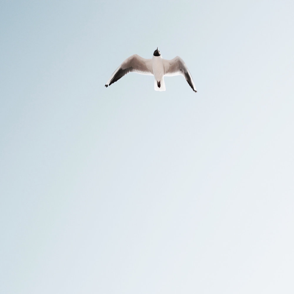 flying-seagul-detail.jpg