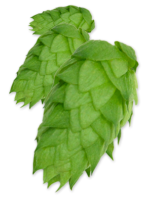 hop-chinook.png