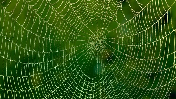 bionic spider silk Graphene.jpg