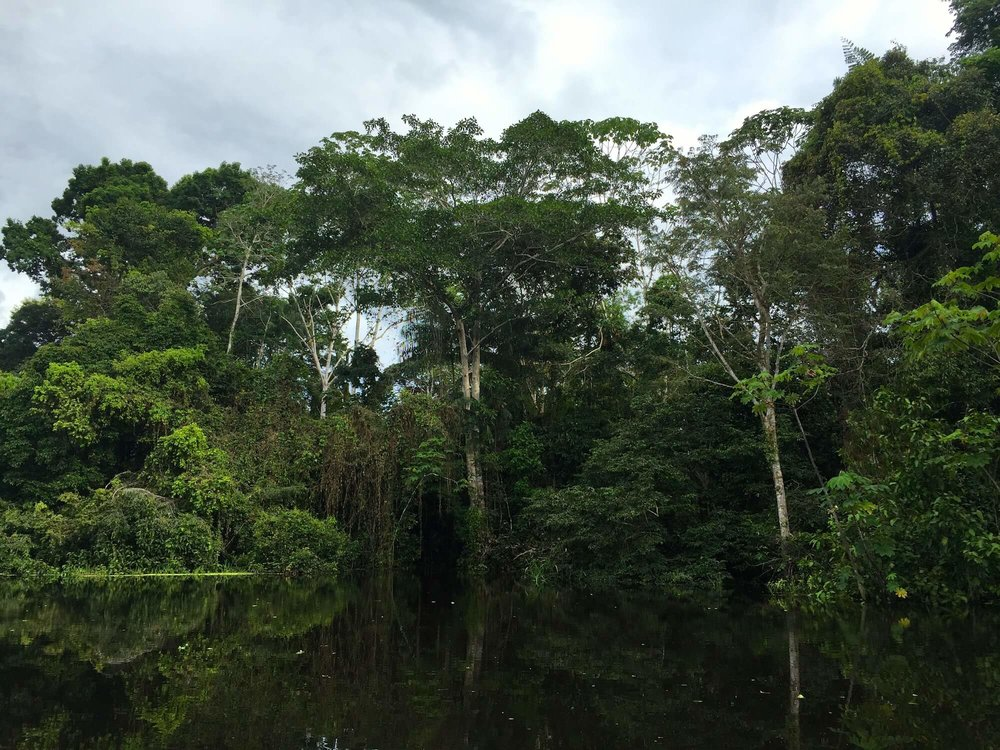 trading superfoods for junk foods in thE amazon jungle