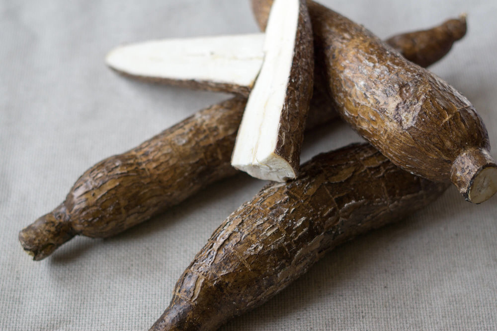 Native to South America, cassava is also called yuca, manioc, or Brazilian arrowroot