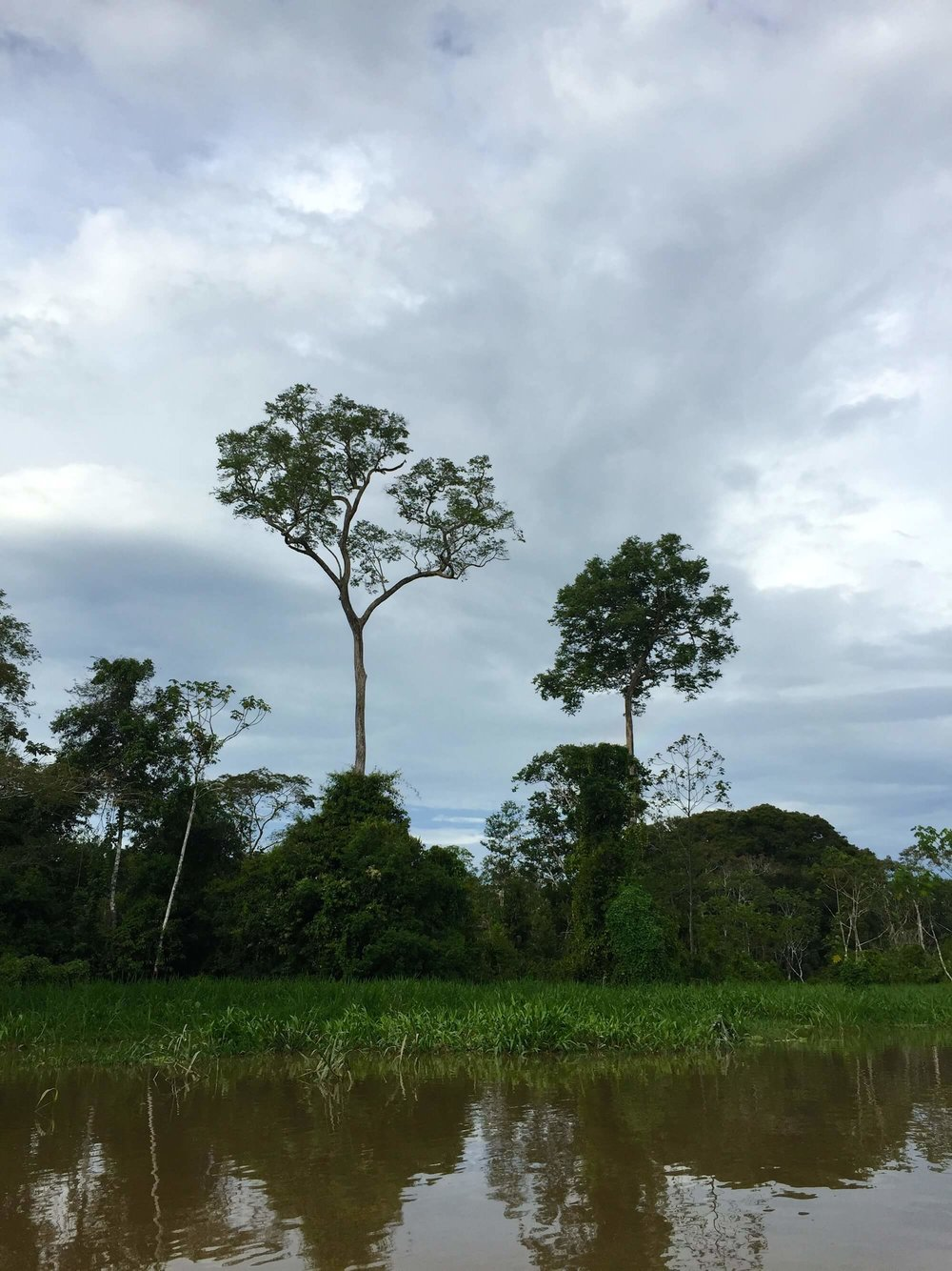 Preserving the Amazon protects both natural habitats and indigenous ways of life