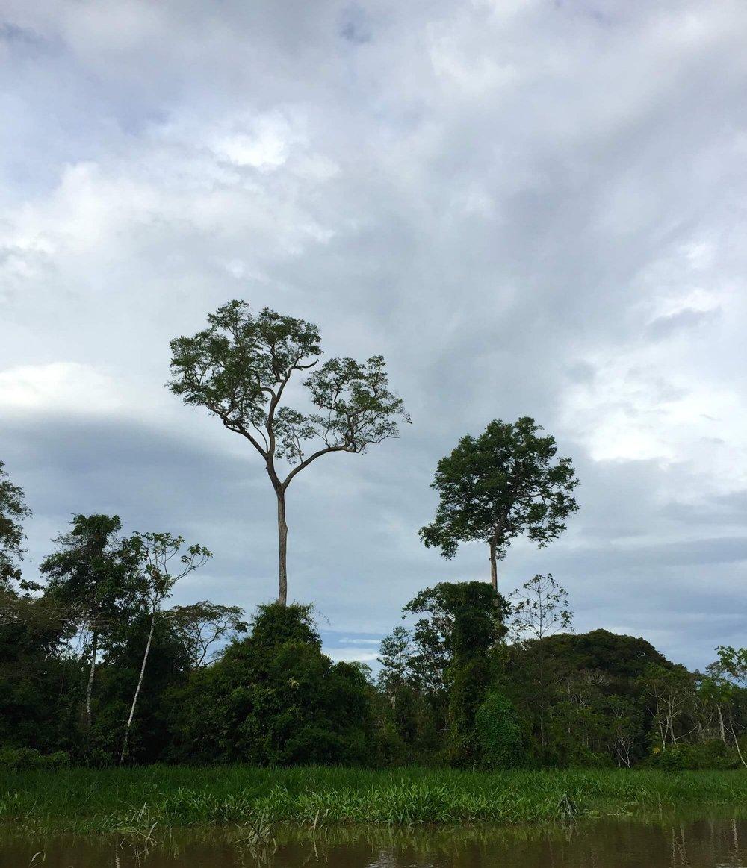 Estamos invitando a un número limitado de estudiantes de las artes culinarias y chefs a unirse a nuestro equipo de investigadores para una expedición en la selva amazónica -