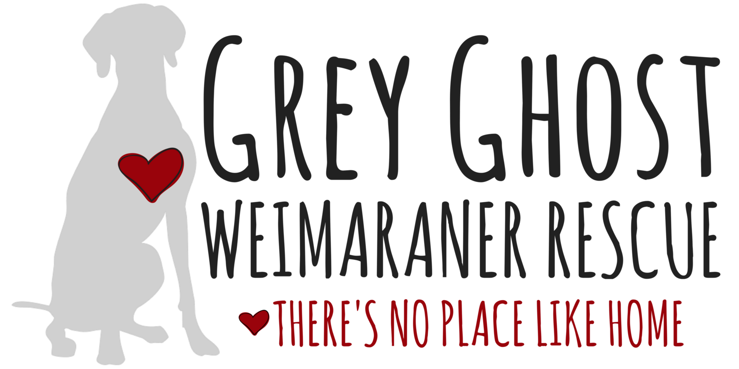 Grey Ghost Weimaraner Rescue