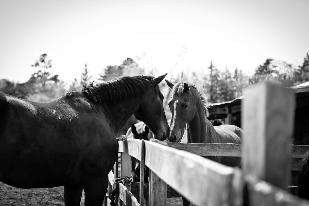 extraphoto3(blue star and mare).jpg