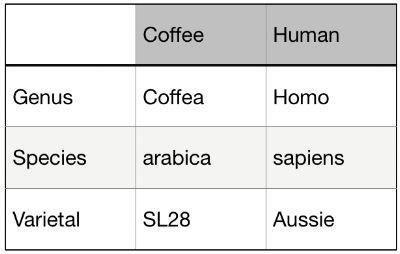 Table 1.1. Comparison of taxonomic terms.