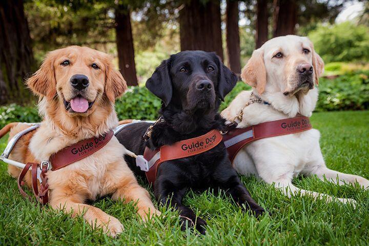 Guide Dog for the Blind - Resolution Revolution Run.jpg