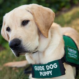Guide Dog for the Blind - Resolution Revolution Run 2.png