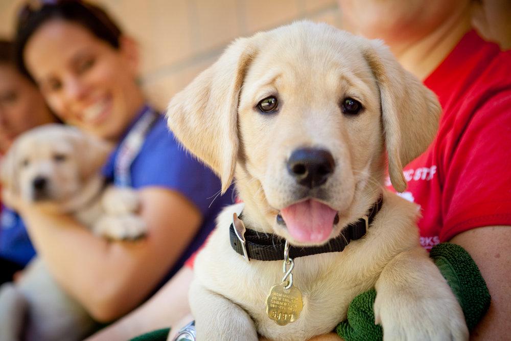 Guide Dog for the Blind - Resolution Revolution Run 3.jpg