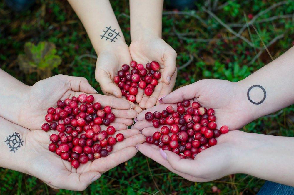 cranberries-2810138_1920.jpg