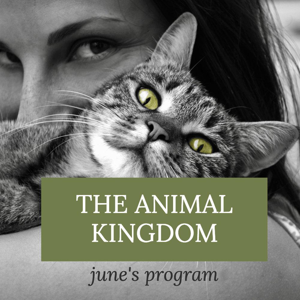 Message Meditation Page - animals (1).jpg