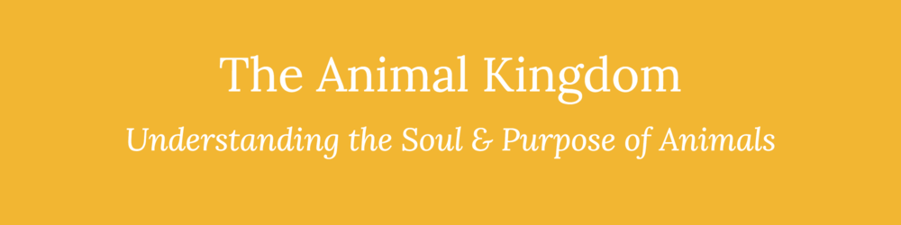 Animal Kingdom - eCourse Banner.png
