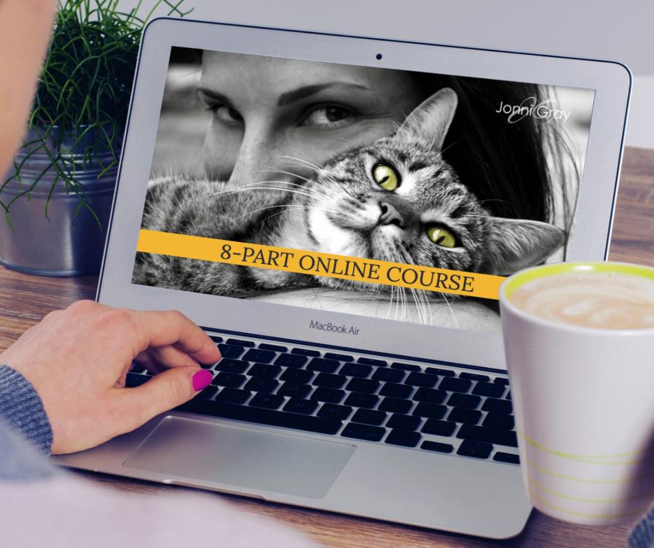 Animal Kingdom - webpage1.jpg