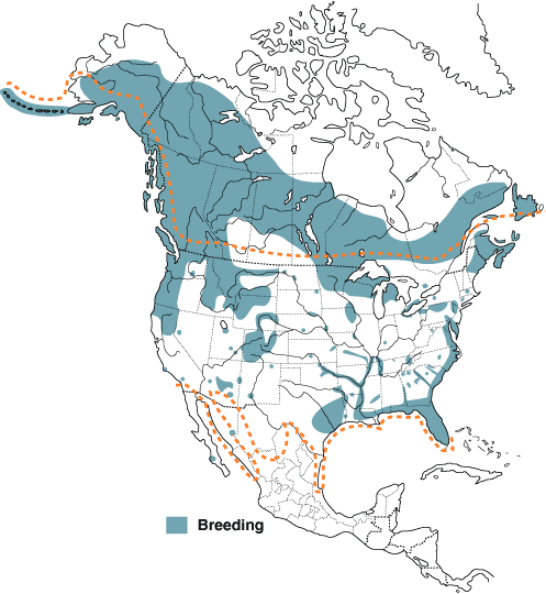 Breeding distribution of the Bald Eagle. Source: North American Birds Online, Cornell Lab of Ornithology.