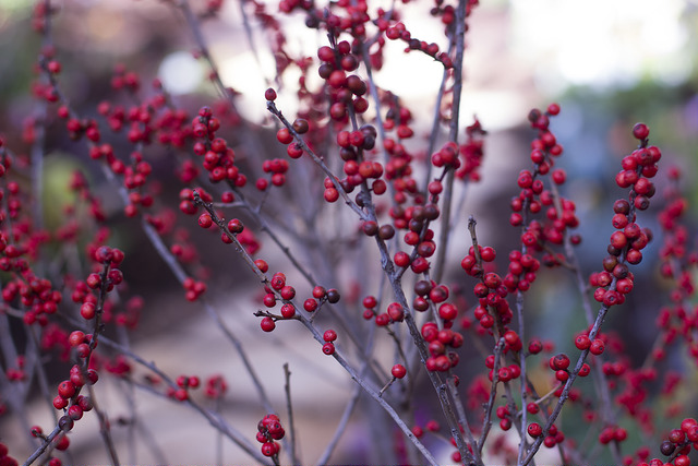 Winterberry by Infineswag