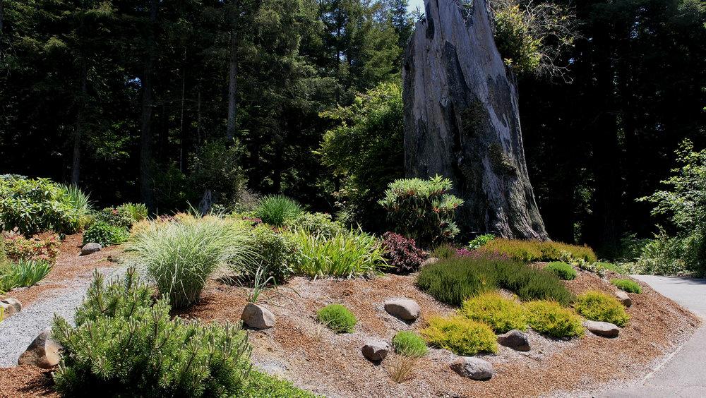 Arcata, CA Garden Design by Ryan Scott