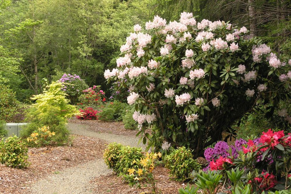 Hiouchi, CA Garden Design by Ryan Scott