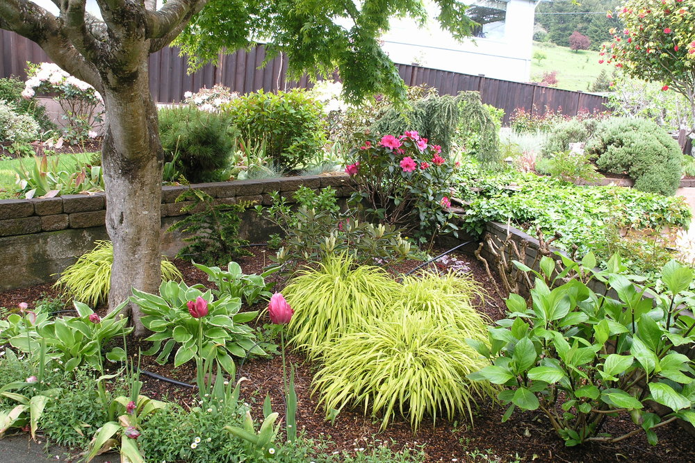 Rio Dell Garden Design by Ryan Scott