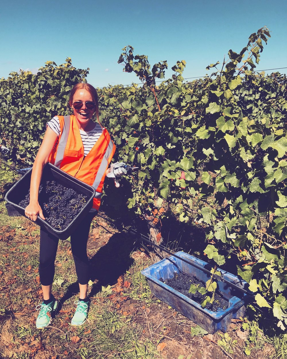 Me in my hi-vis at grape harvest