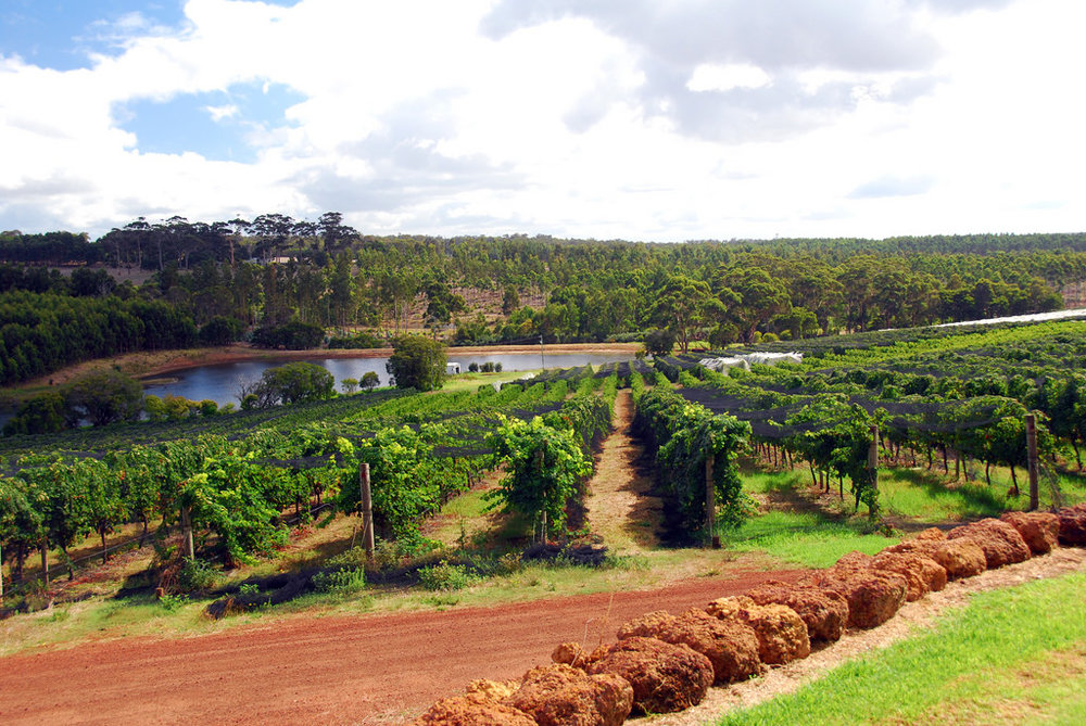 Photo: A vineyard in Margaret River, WA