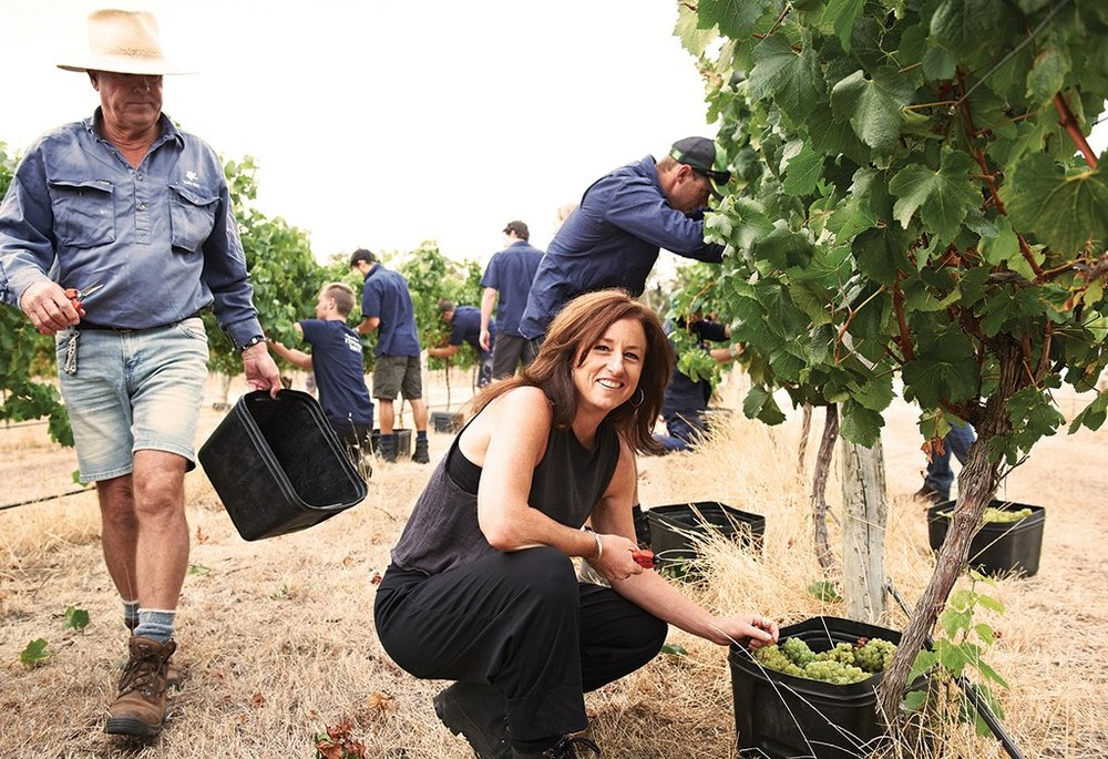 Virginia Willcock during one of Vasse Felix's grape harvests.