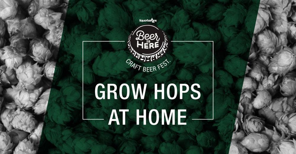 Craft-Beer-Fest-Week-2-Grow-Hops.jpg