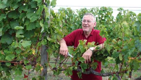 churchview-wine-picking.jpg
