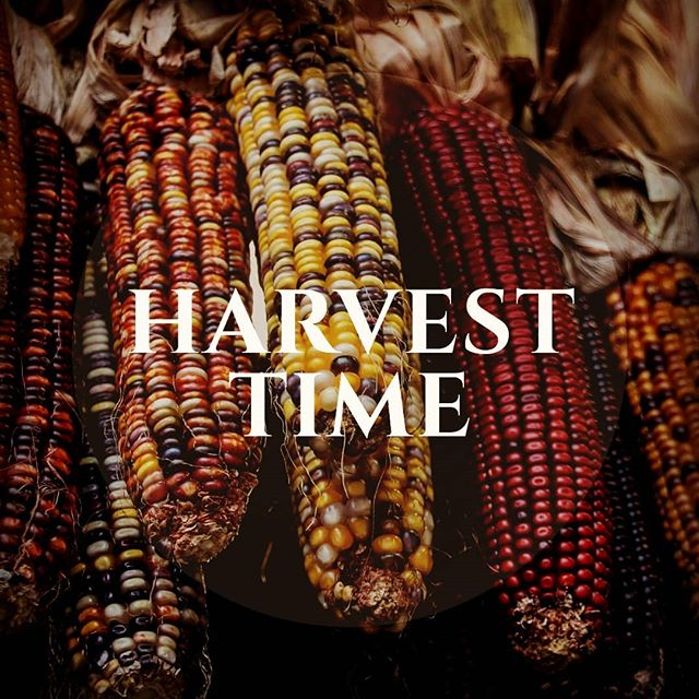 It's our 3rd harvest with the farmers on the volcano 🌋 in Mexico 🇲🇽 they grow a whole variety of corn that is simply beautiful, healthy and tasty!!! All our corn is grown from traditional farming techniques, with ZERO artificial pesticides, herbicides or fertilisers. This knowledge is passed on, with heritage seeds, from generation to generation in these indigenous communities. They're redefining #sustainability  #continuethelegacy @bluepinole #glutenfree #vegan #health #foodporn #awsome #farming #corn #maize #biodiversity #seeds #harvest #earth #planet