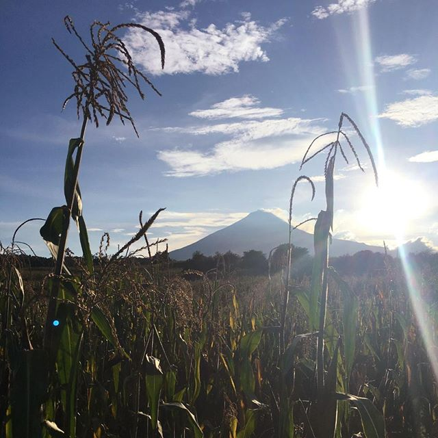 The boss, Alex, is just back from Mexico working with our wonderful suppliers on the latest harvest of blue corn for our fabulous pinole. Here you can see the smoking volcano which helps produce the fertile soil that provides the ideal growing conditions for blue corn. #Mexico #pinole #ContinueTheLegacy #Tarahumara #raramuri #ultrarunning
