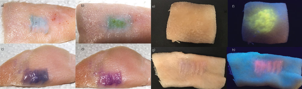 Biosensors tattooed in pig skin and the interaction under solutions. (a) Glucose biosensor, (b) Glucose biosensor with glucose, (c) Chromogenic biosensor at pH 8.0, (d) Chromogenic biosensor at pH 7.0, (e) Sodium green biosensor tattooed in skin under visible light, (f) Sodium green biosensor tattooed in skin under UV light excitation, (g) Fluorescent SNARF sensor tattooed in skin under visible light, (h) Fluorescent SNARF sensor tattooed in skin under UV light excitation at pH 8.0. Scale bar= 1 cm.