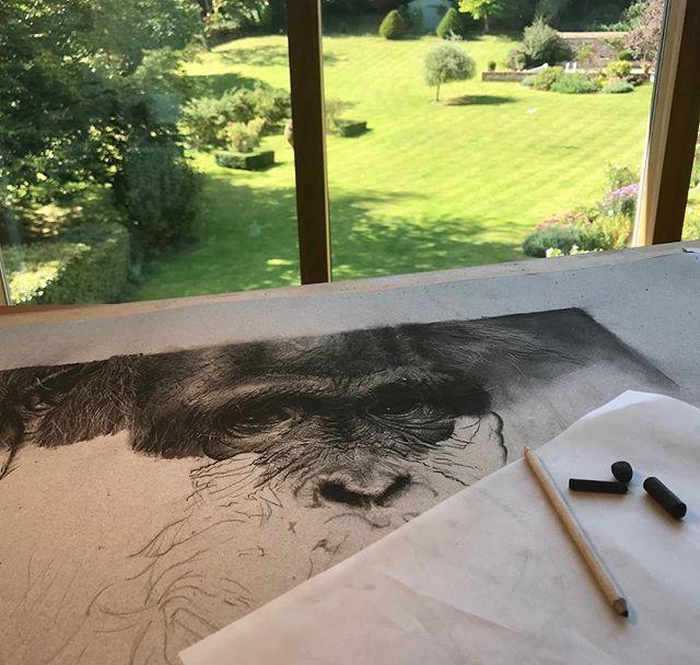 Current view from my studio on this beautiful autumn day :).....#orangutan  #VioletAstorArt #charcoal #wildlife #art #conservation  #artist #animallover #artist #contemporaryart #wip #artlovers #pencilsacademy #artcollector #instaart #artistsofinstagram #charcoaldrawing #art_seeking #studio