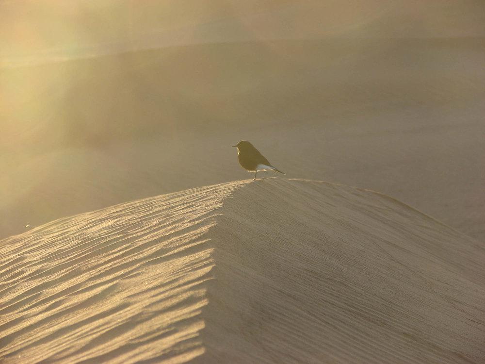 Maroc desert 4.jpg