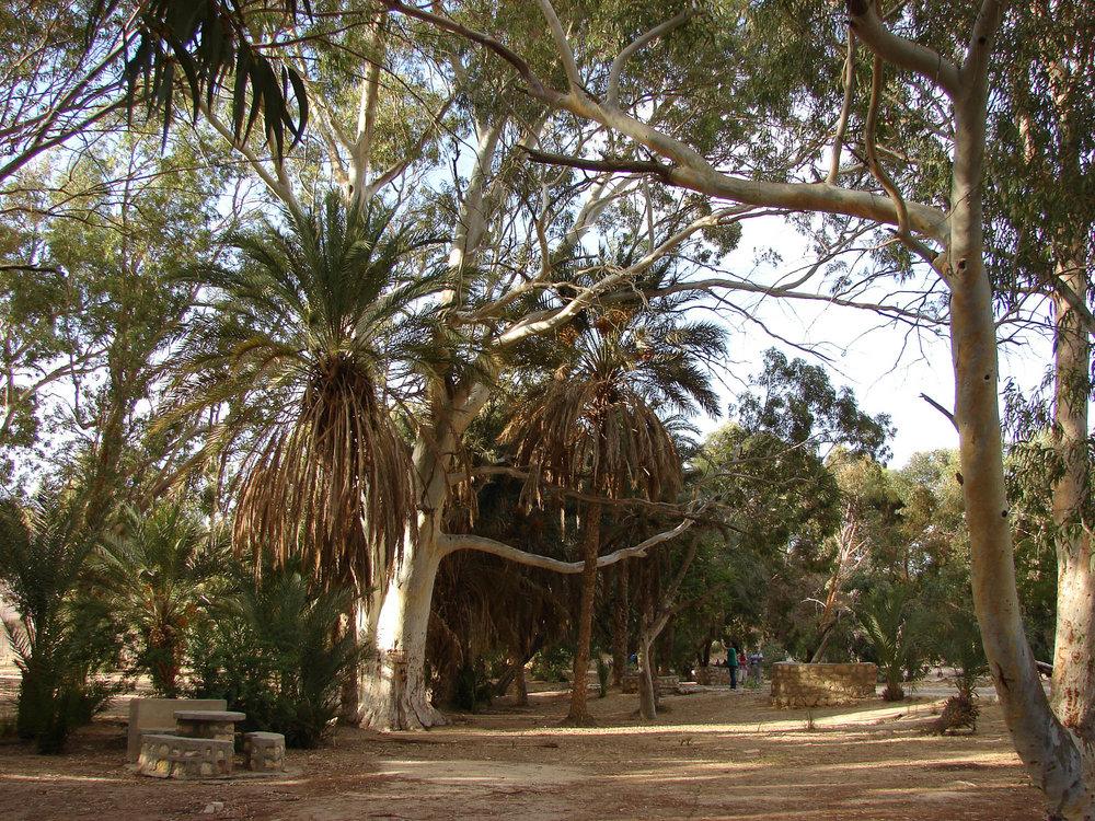TUNISIE 9.jpg