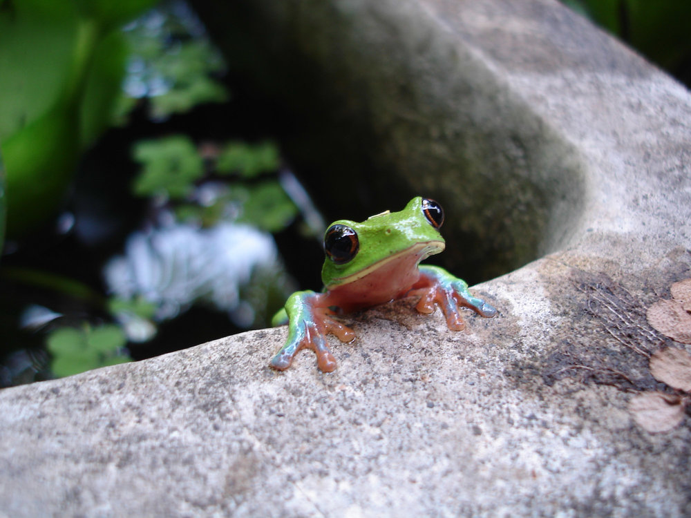 Ecotourisme-voyages-alternatifs-Costa Rica-En liberte15jours-3.jpg