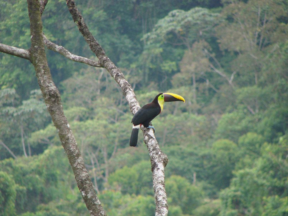 Ecotourisme-voyages-alternatifs-Costa Rica-En liberte15jours-13.jpg