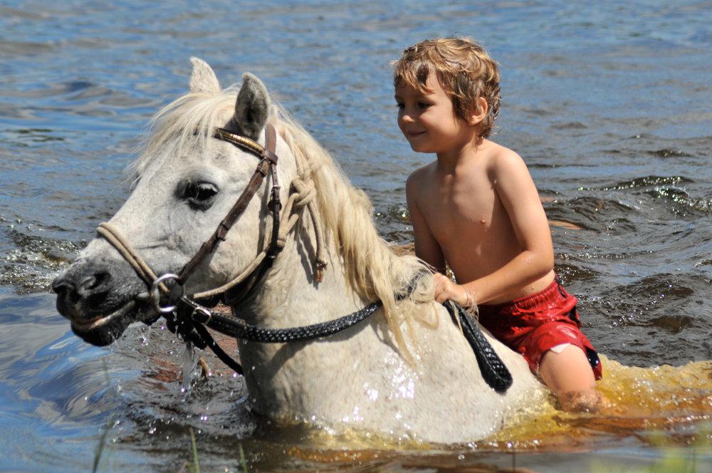 cheval-daventure-ma-ferme-africaine (1).jpg