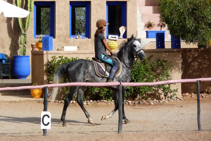 ranch-maroc-cheval03.jpg