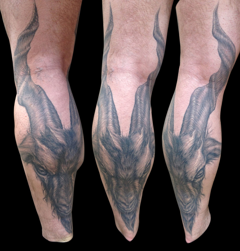 Freehand Black and Grey Baphomet Style Goat Head Tattoo, drawn to flex eyebrow expression with calf muscle as seen in the first photo (healed) on back of leg