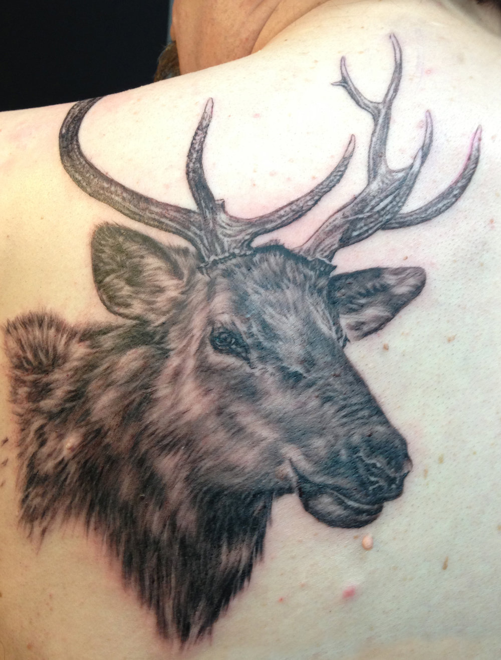 Black and Grey Elk Portrait Tattoo, (fresh)
