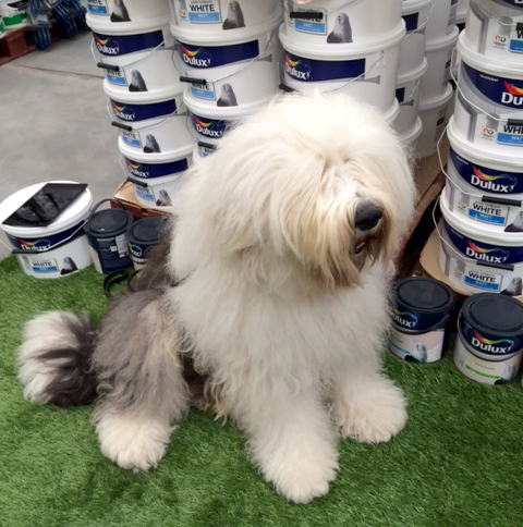 Lewis, The Dulux Dog, Craft Event b and q.jpg