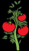 free-vector-tomato-plant-clip-art_114555_Tomato_Plant_clip_art_hight.png