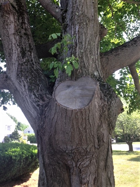Heart in Tree.jpg