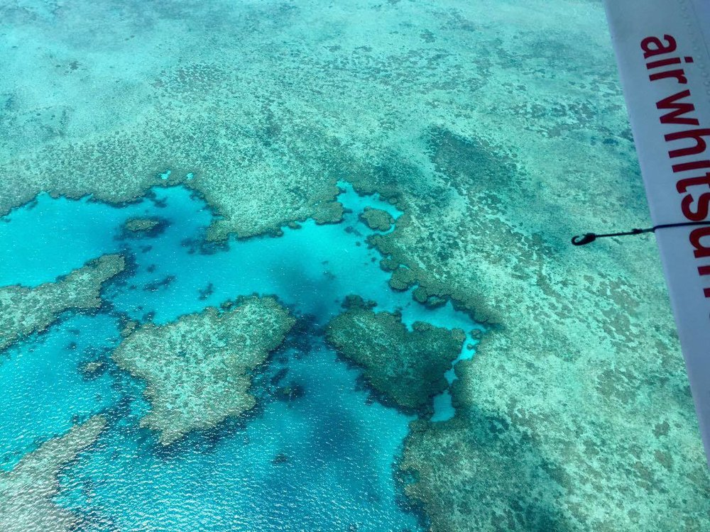 Typical tours to the more remote areas of the reef will include seaplane transfer for an aerial view, in conjunction with a boat tour for snorkeling opportunities. Without a underwater camera, I was unable to take any pictures of the dynamic life beneath the surface. Suffice it to say, however, the real attraction of the Greater Barrier Reef lies underwater.