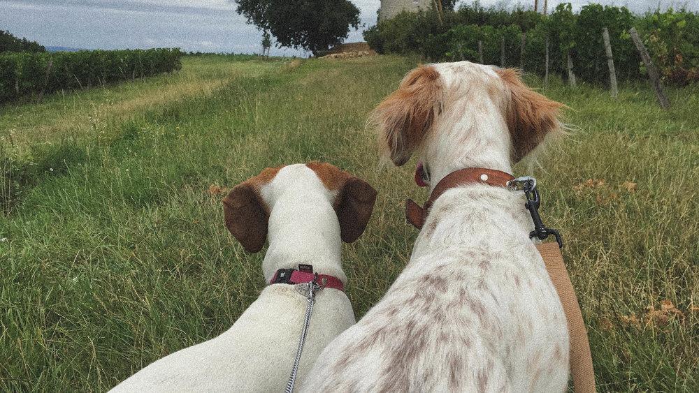 EDIE & LUCIEN-2.jpg