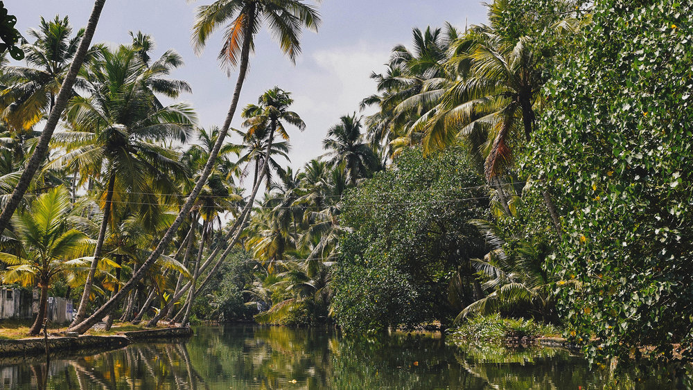 Backwaters-2 copy.jpg